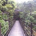 写真:城ケ崎つり橋(はしだて)