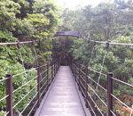 城ケ崎つり橋(はしだて)