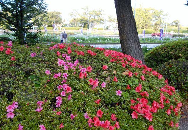 碧南市の花しょうぶまつりの時期は必見!