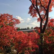 水景園の紅葉が見事!家族連れでのんびり自然を楽しめる