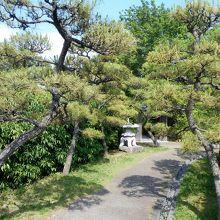 哲学の小径の松並木と石燈籠。