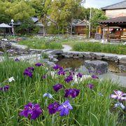 西三河で花しょうぶを観るなら碧南の油ヶ渕かここ!