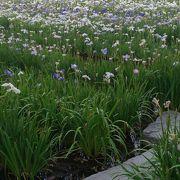 花しょうぶで有名な公園です