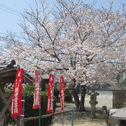 宝樹院・・・桜がステキ