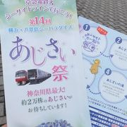 神奈川県最大20,000株のアジサイが見事でした