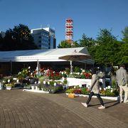 花市場や蘭の展示・販売