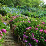 紫陽花の名所