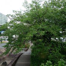 元茨木川緑地は桜や緑が美しい