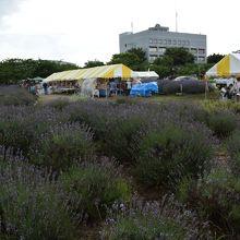 久喜市役所菖蒲総合支所の前にあります。
