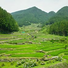 気持ちのいい日本の原風景