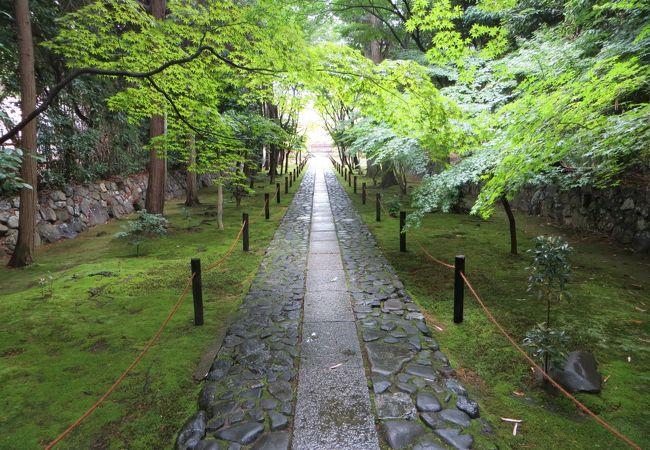 雨のあとの参道。