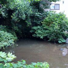弁財天の隣にある池