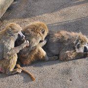サル好きにはたまらない動物園