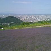 ラベンダーの咲く円山西から市内全景が見える