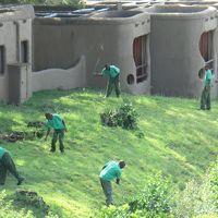 スタッフが草刈りをしています