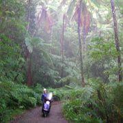 ジャングルの様な雰囲気