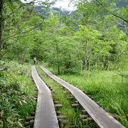 木道が整備されています。