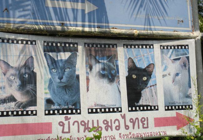 タイ猫交配養護施設
