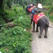 象乗りは楽しい!