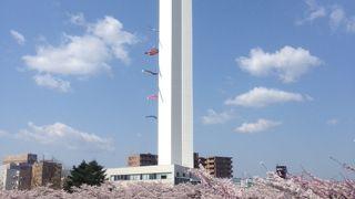 桜の時期がおすすめ