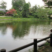 サルスベリの花が水面に写り、釣り人が竿を垂れていました。