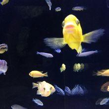 小さい魚もいます♪