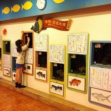 赤ちゃん水族館の展示