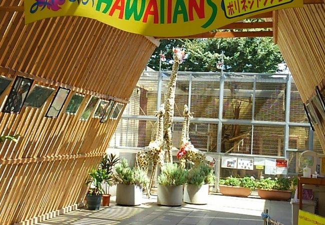Hula Lehua (みんなのハワイアンズ店)