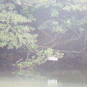 浦内川の奥です