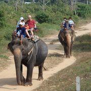 揺れるのでちょっと怖かったけど・・象乗りを満喫