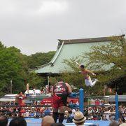 今年も遊行寺プロレス開催!