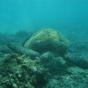 海亀と遭遇