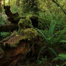 森の中、一面苔に覆われています。