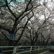 夜桜綺麗です