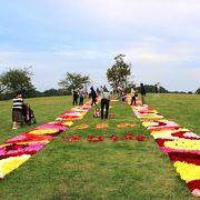 芝生の丘にダリアの花絨毯♪