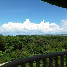 展望台から見る森
