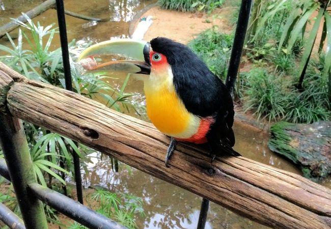 珍しい鳥を身近にみることができます