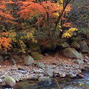 原生林の中を歩きます、紅葉の季節は最高です