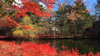 秋の紅葉が最高