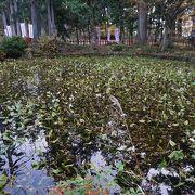 池の水はけっこう澄んでいて、清らかな感じ