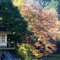春は花見、秋は紅葉狩り、釣りはオールシーズン!
