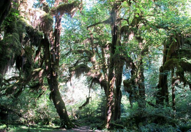 世界遺産の名に恥じない素晴らしい国立公園、オリンピック山脈・温帯雨林・自然海岸線それぞれ1ヶ所は訪問しましょう