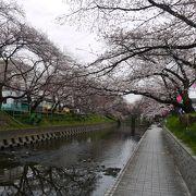 桜の絶景ポイント