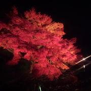 園内のライトアップがきれいです