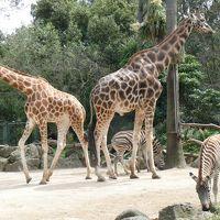 メルボルン動物園