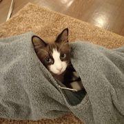 猫好きな方は是非!沢山のにゃんこに癒されます♪