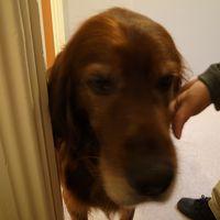 看板犬のビーンズ。大人しいです。