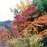 紅葉/黄葉に加え、竹の緑や冬桜の薄桃で彩り豊か
