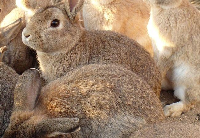 近水園の近く。ウサギもかわいい。