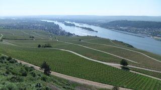 ワイン畑とライン川